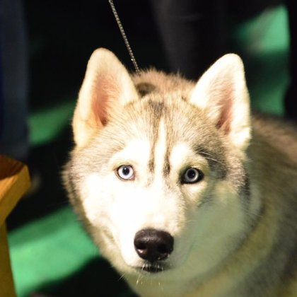 "11/06/16, All breeds CAC national Dog Show (kennel club ""Balto"")"