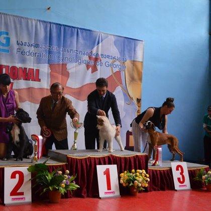 CAC-CACIB FCI dog show Georgia-2014, 11.05.2014