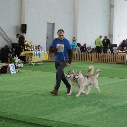 "International FCI-FCG dog show ""Tbilisi Challenge-2015"", 28.03.15"