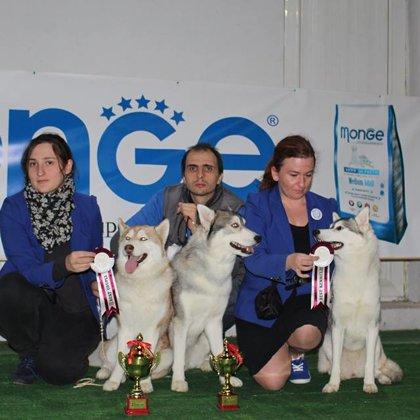 FCG-FCI autumn Dog Shows CAC-CACIB 2015